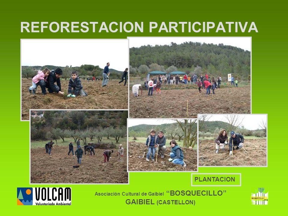 Asociación Cultural de Gaibiel BOSQUECILLO GAIBIEL (CASTELLON) REFORESTACION PARTICIPATIVA PLANTACION