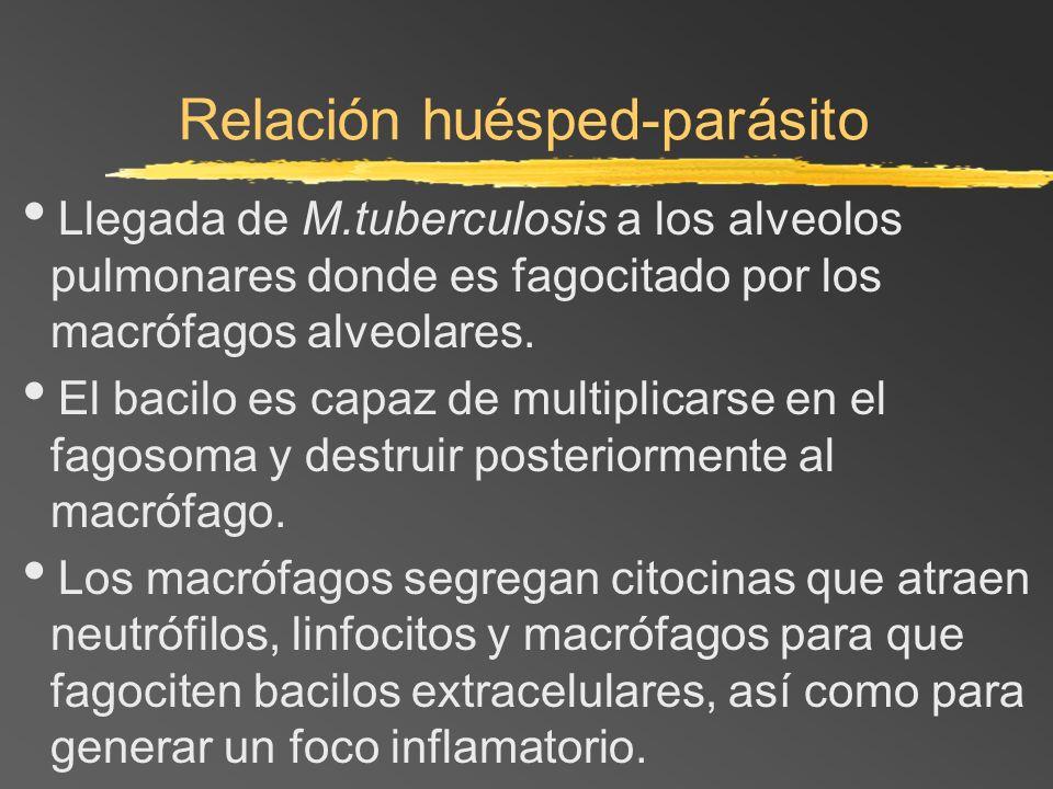 Relación huésped-parásito Llegada de M.tuberculosis a los alveolos pulmonares donde es fagocitado por los macrófagos alveolares. El bacilo es capaz de