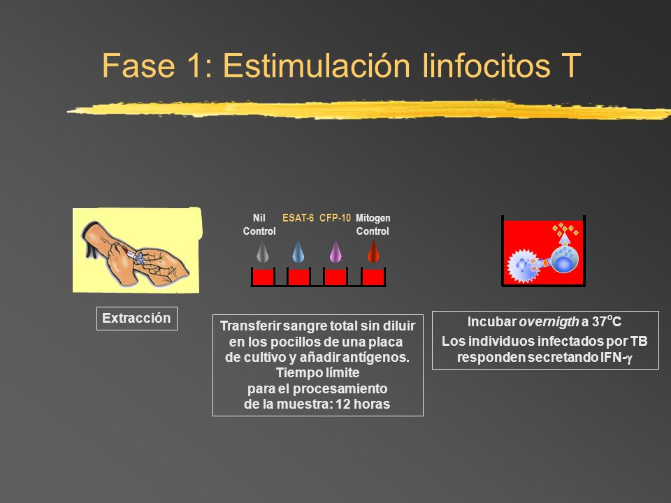 Extracción Incubar overnigth a 37 o C Los individuos infectados por TB responden secretando IFN- Fase 1: Estimulación linfocitos T ESAT-6CFP-10Mitogen