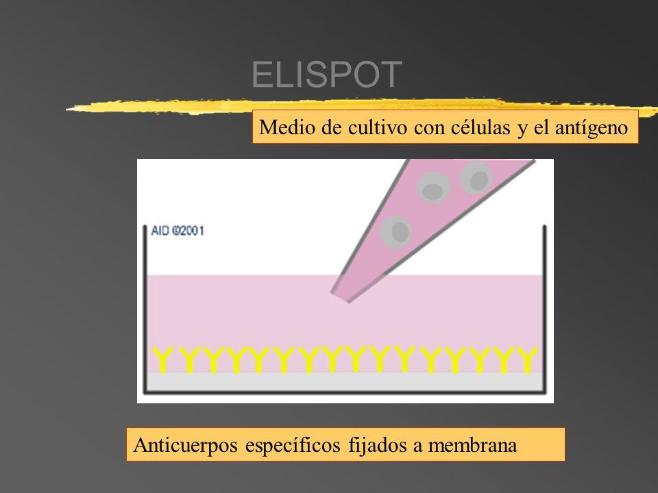 ELISPOT Anticuerpos específicos fijados a membrana Medio de cultivo con células y el antígeno