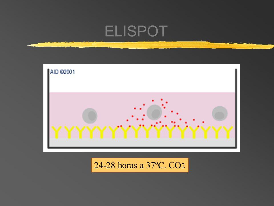 ELISPOT 24-28 horas a 37ºC. CO 2