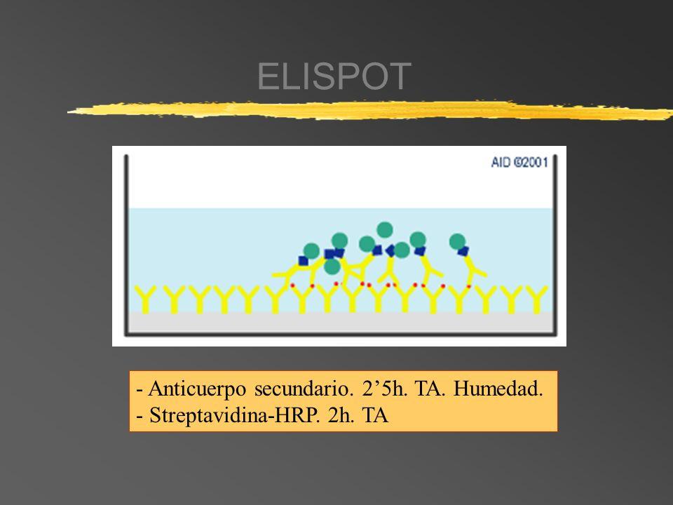 ELISPOT - Anticuerpo secundario. 25h. TA. Humedad. - Streptavidina-HRP. 2h. TA