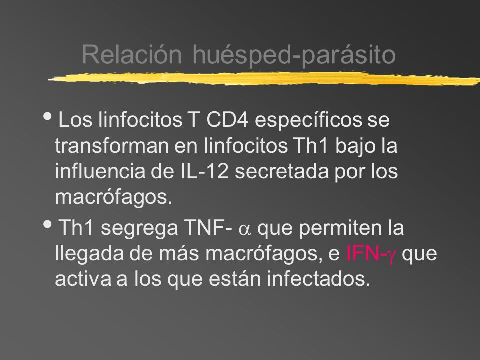 Relación huésped-parásito Los linfocitos T CD4 específicos se transforman en linfocitos Th1 bajo la influencia de IL-12 secretada por los macrófagos.