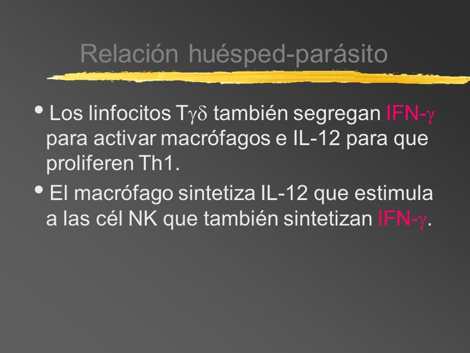 Relación huésped-parásito Los linfocitos T también segregan IFN- para activar macrófagos e IL-12 para que proliferen Th1. El macrófago sintetiza IL-12