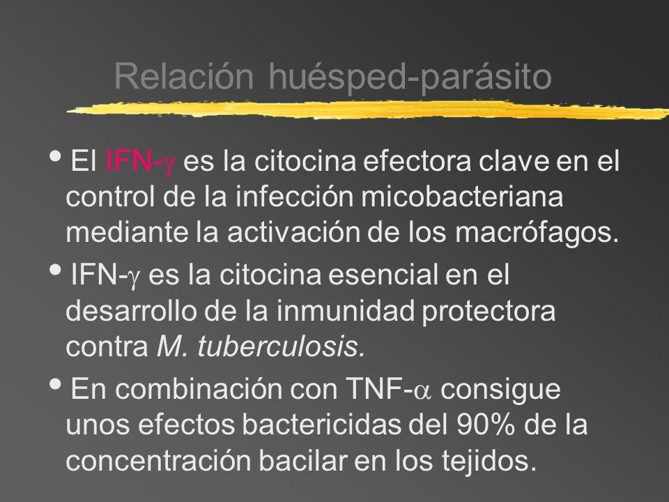 Relación huésped-parásito El IFN- es la citocina efectora clave en el control de la infección micobacteriana mediante la activación de los macrófagos.