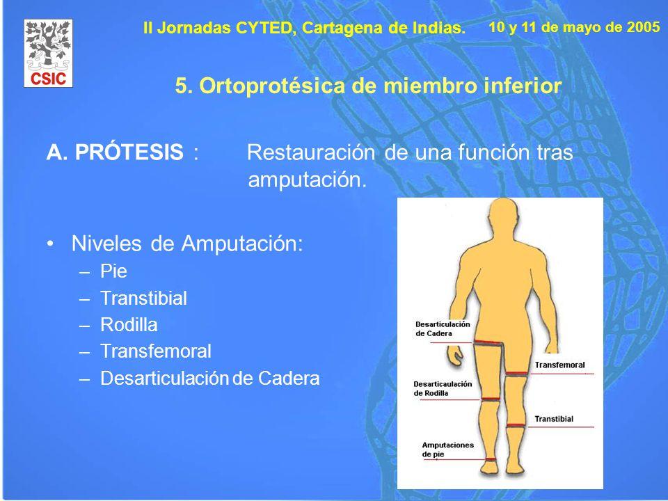 10 y 11 de mayo de 2005 II Jornadas CYTED, Cartagena de Indias. 5. Ortoprotésica de miembro inferior A. PRÓTESIS : Restauración de una función tras am