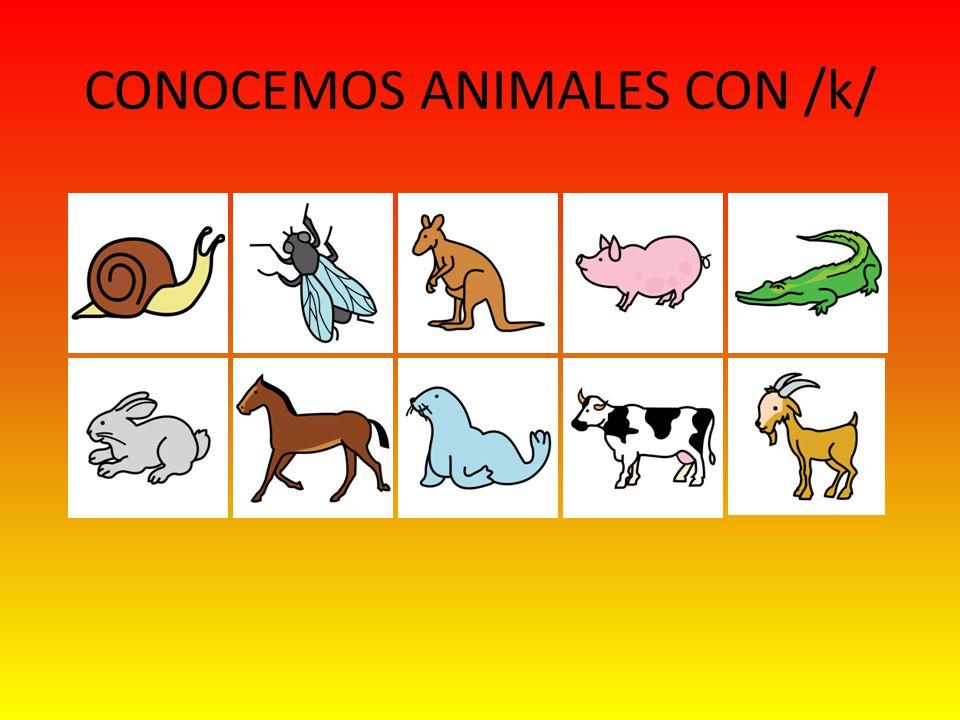 CONOCEMOS ANIMALES CON /k/