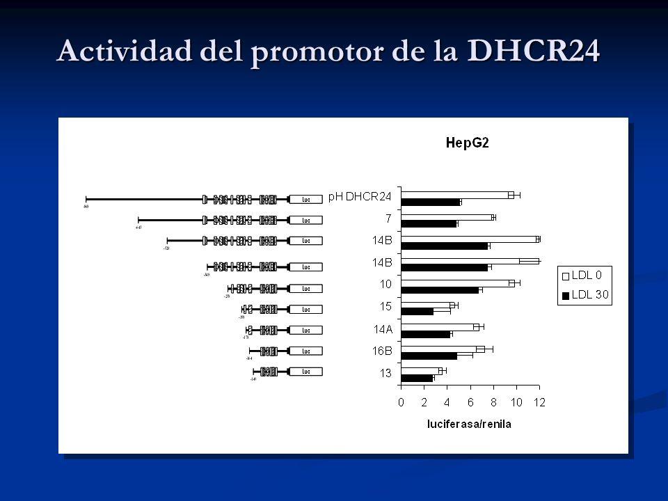 Actividad del promotor de la DHCR24