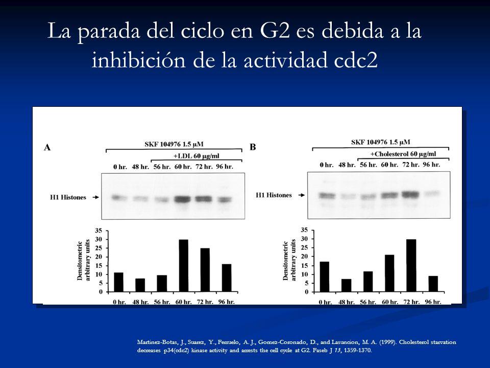 La parada del ciclo en G2 es debida a la inhibición de la actividad cdc2 Martinez-Botas, J., Suarez, Y., Ferruelo, A.