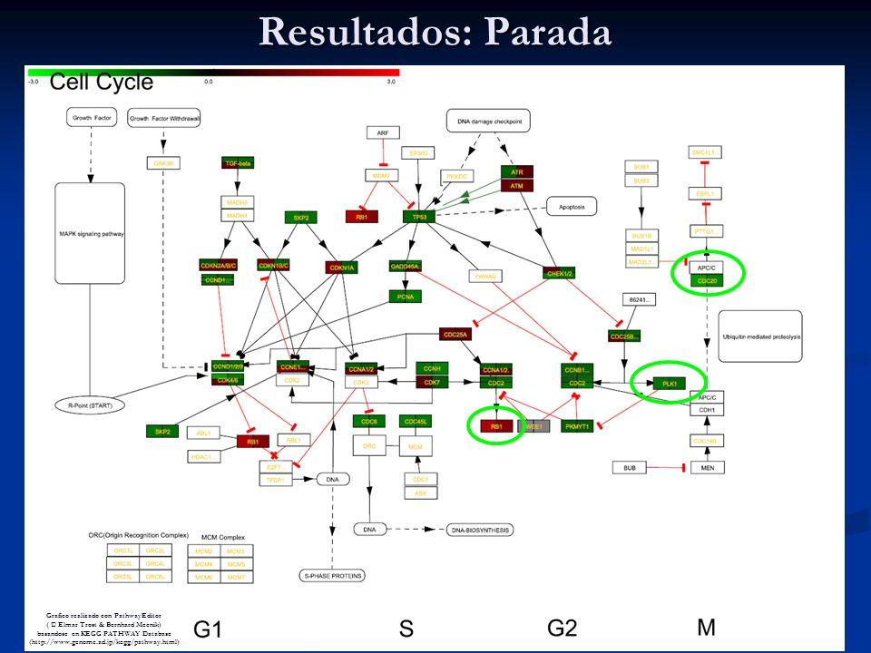 Grafico realizado con PathwayEditor ( © Elmar Trost & Bernhard Mecnik) basandose en KEGG PATHWAY Database (http://www.genome.ad.jp/kegg/pathway.html) Resultados: Parada