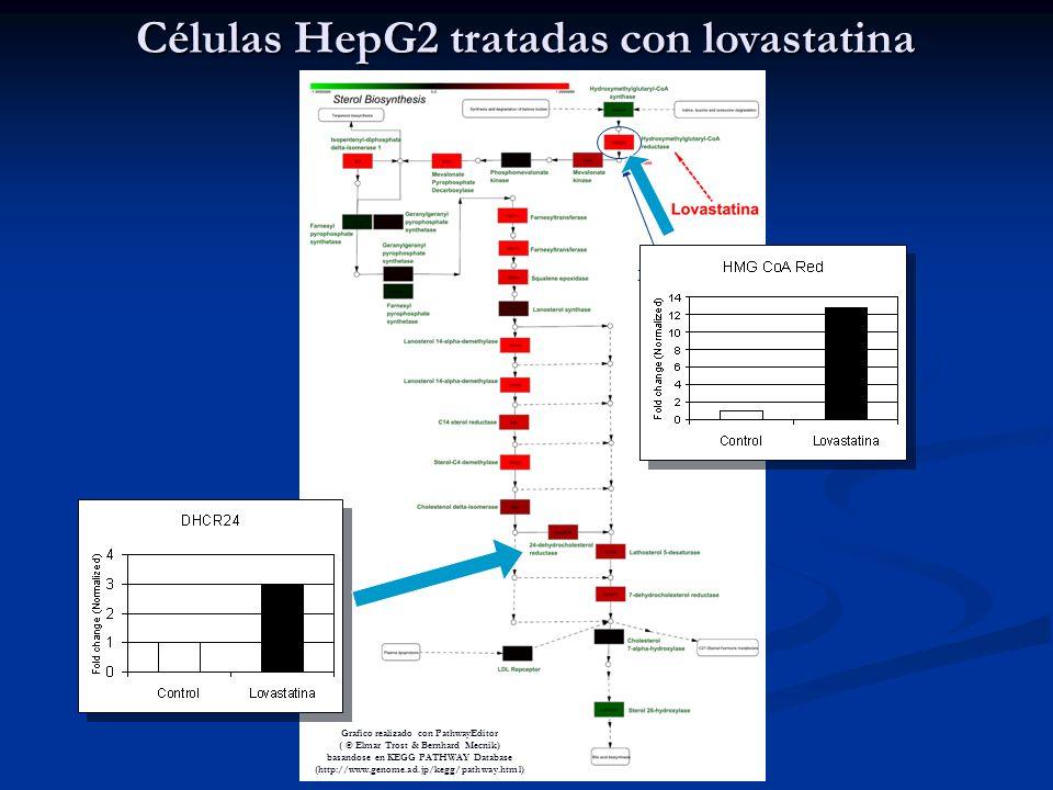 Media de las 6 replicas Células HepG2 tratadas con lovastatina Grafico realizado con PathwayEditor ( © Elmar Trost & Bernhard Mecnik) basandose en KEGG PATHWAY Database (http://www.genome.ad.jp/kegg/pathway.html)