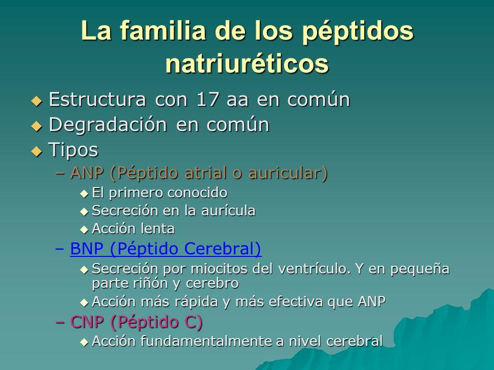 La familia de los péptidos natriuréticos Estructura con 17 aa en común Estructura con 17 aa en común Degradación en común Degradación en común Tipos T