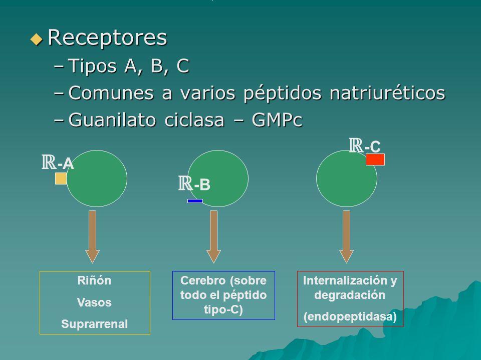 Receptores Receptores –Tipos A, B, C –Comunes a varios péptidos natriuréticos –Guanilato ciclasa – GMPc Riñón Vasos Suprarrenal Cerebro (sobre todo el
