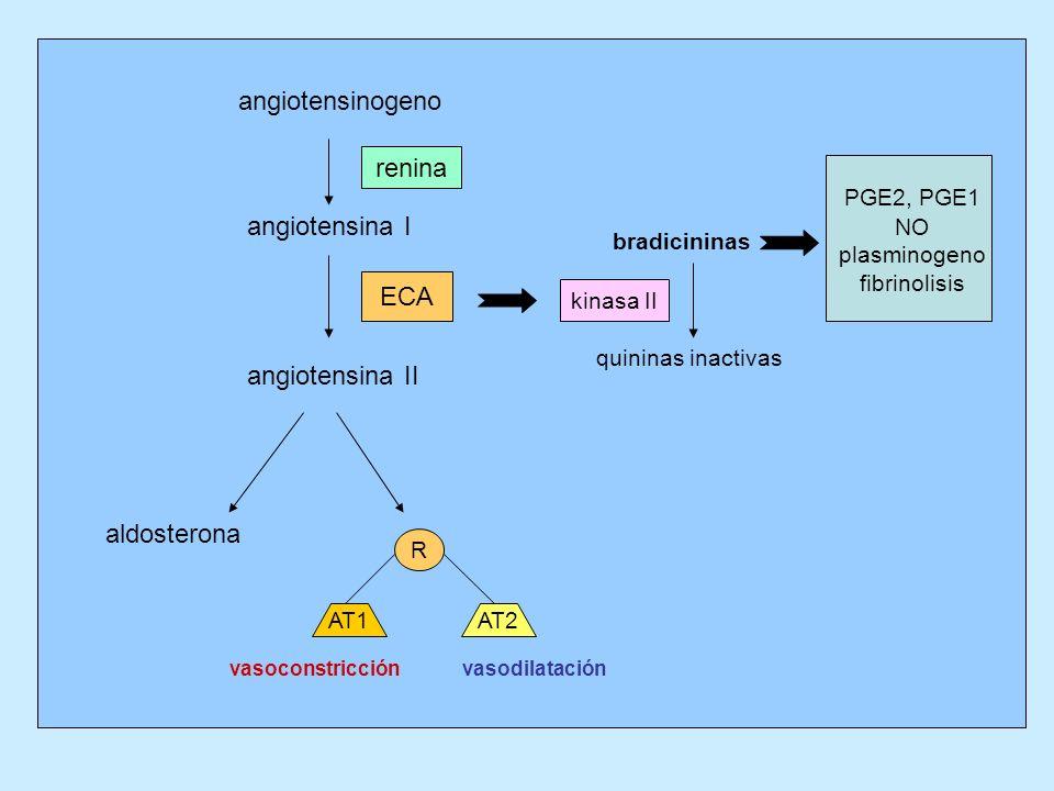 angiotensinogeno angiotensina I angiotensina II aldosterona bradicininas quininas inactivas R AT1AT2 renina ECA kinasa II PGE2, PGE1 NO plasminogeno f