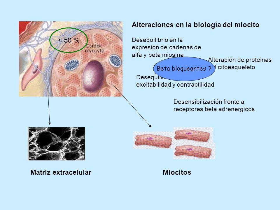 Alteraciones en la biología del miocito Desequilibrio en la expresión de cadenas de alfa y beta miosina Alteración de proteinas del citoesqueleto Dese