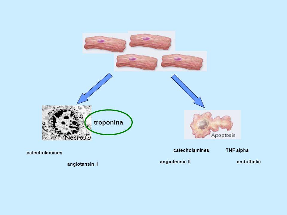 Necrosis catecholamines angiotensin II catecholamines angiotensin II TNF alpha endothelin troponina