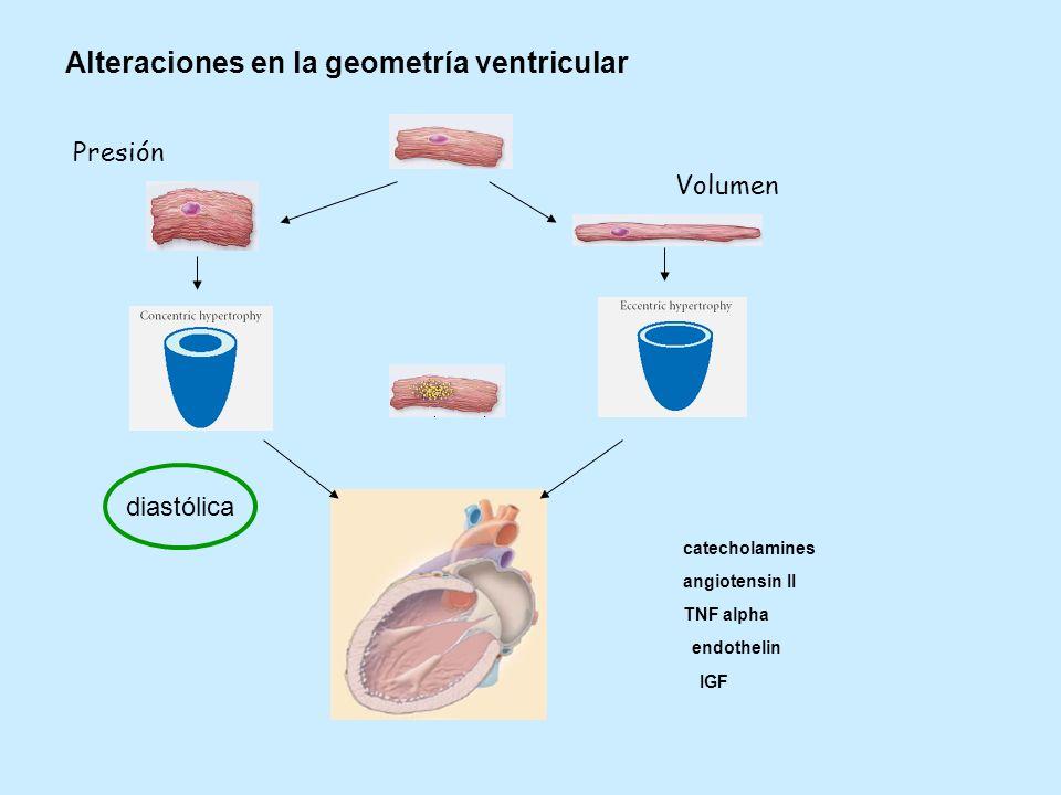 Alteraciones en la geometría ventricular Presión Volumen diastólica catecholamines angiotensin II TNF alpha endothelin IGF