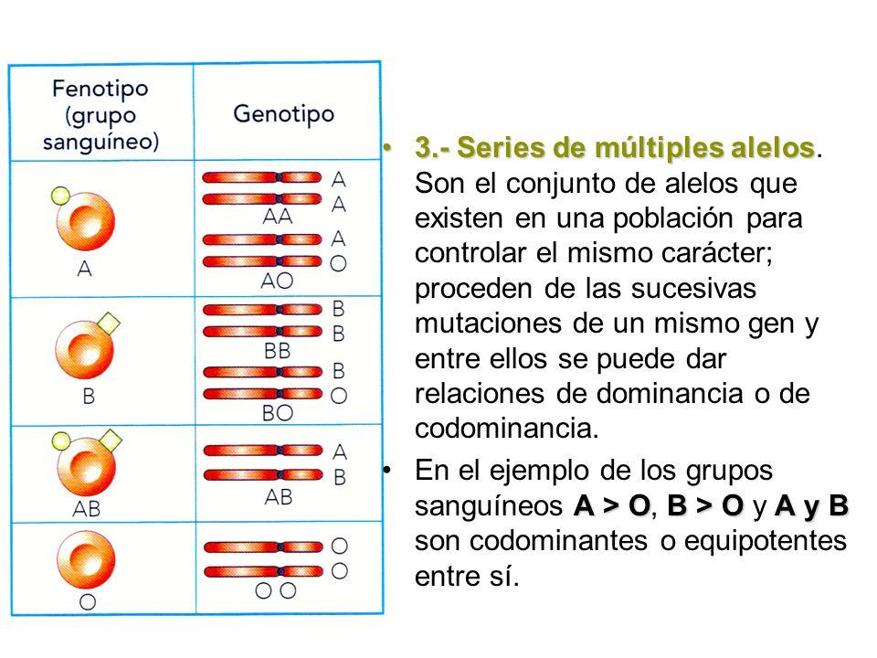 3.- Series de múltiples alelos3.- Series de múltiples alelos. Son el conjunto de alelos que existen en una población para controlar el mismo carácter;