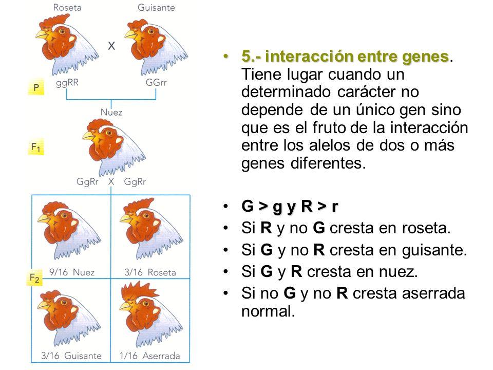 5.- interacción entre genes5.- interacción entre genes. Tiene lugar cuando un determinado carácter no depende de un único gen sino que es el fruto de