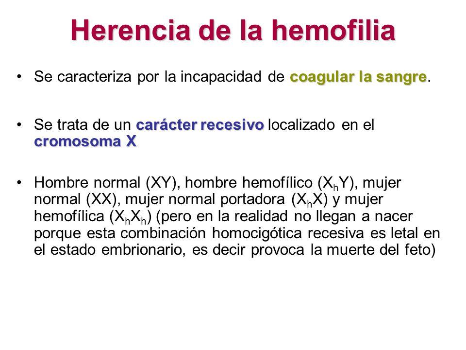 Herencia de la hemofilia coagular la sangreSe caracteriza por la incapacidad de coagular la sangre. carácter recesivo cromosoma XSe trata de un caráct