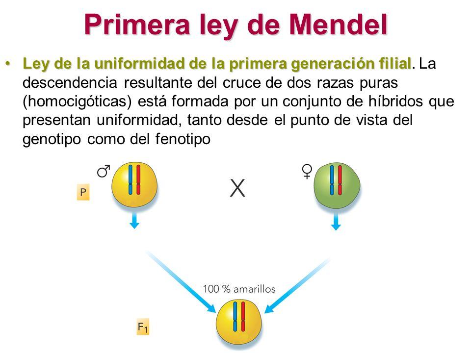 Primera ley de Mendel Ley de la uniformidad de la primera generación filialLey de la uniformidad de la primera generación filial. La descendencia resu