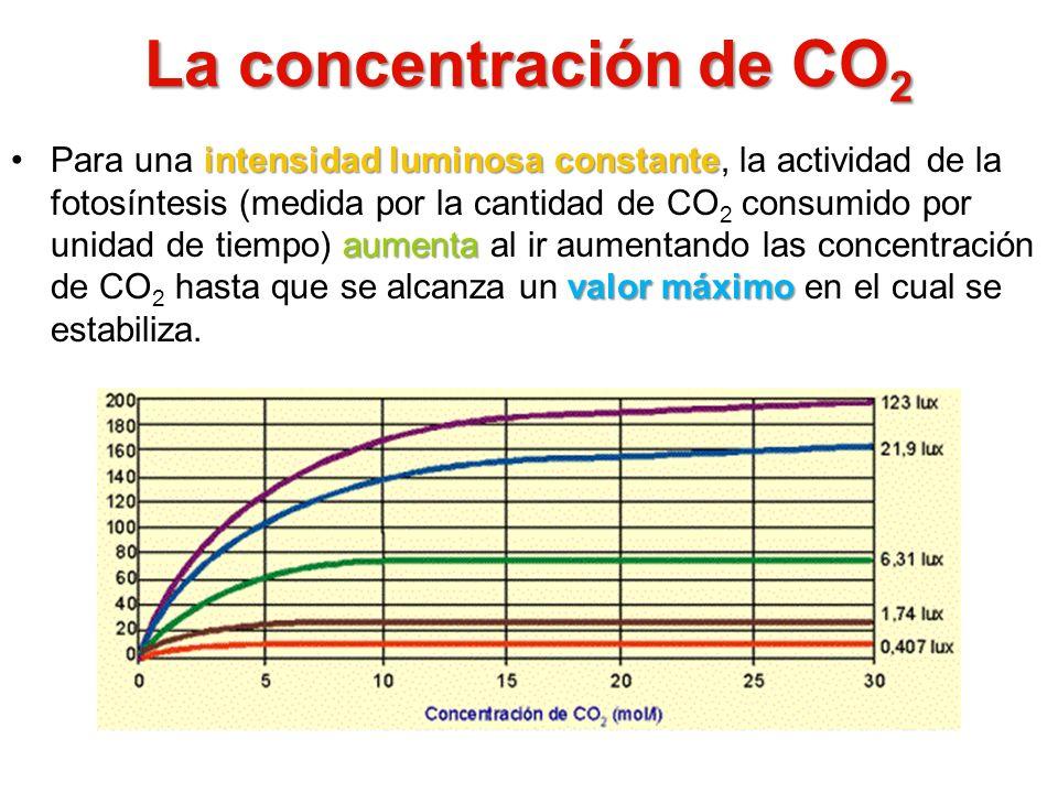 La concentración de CO 2 intensidad luminosa constante aumenta valor máximoPara una intensidad luminosa constante, la actividad de la fotosíntesis (me