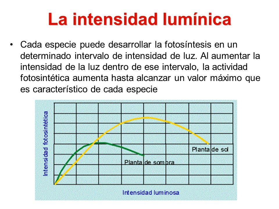 La intensidad lumínica Cada especie puede desarrollar la fotosíntesis en un determinado intervalo de intensidad de luz. Al aumentar la intensidad de l