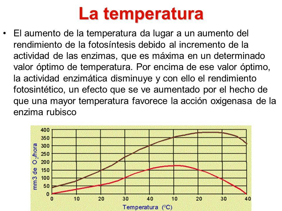 La temperatura El aumento de la temperatura da lugar a un aumento del rendimiento de la fotosíntesis debido al incremento de la actividad de las enzim