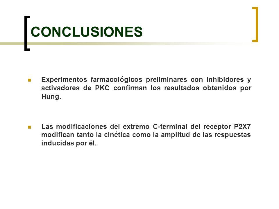 Experimentos farmacológicos preliminares con inhibidores y activadores de PKC confirman los resultados obtenidos por Hung. Las modificaciones del extr