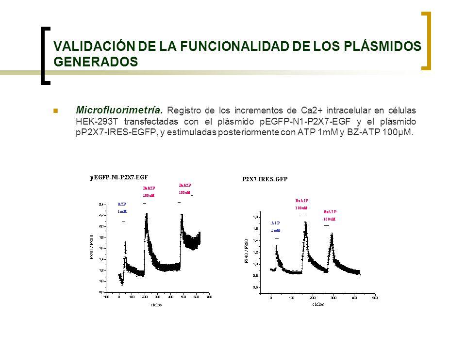 VALIDACIÓN DE LA FUNCIONALIDAD DE LOS PLÁSMIDOS GENERADOS Microfluorimetría. Registro de los incrementos de Ca2+ intracelular en células HEK-293T tran