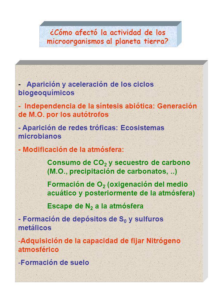 ¿Cómo afectó la actividad de los microorganismos al planeta tierra.