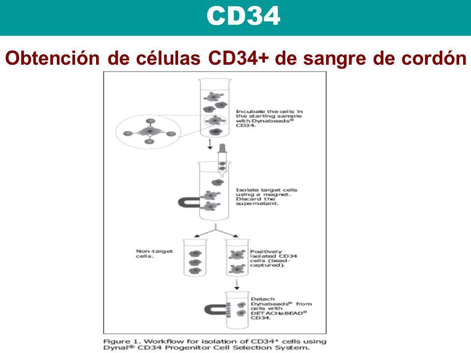 Obtención de células CD34+ de sangre de cordón CD34