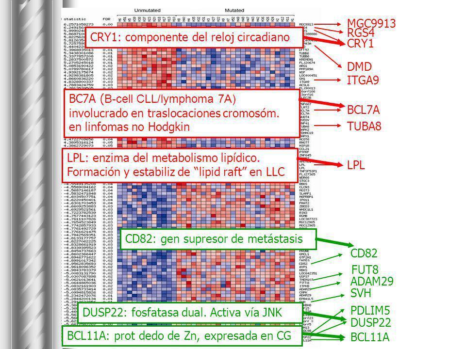 LPL: enzima del metabolismo lipídico. Formación y estabiliz de lipid raft en LLC BC7A ( B-cell CLL/lymphoma 7A) involucrado en traslocaciones cromosóm