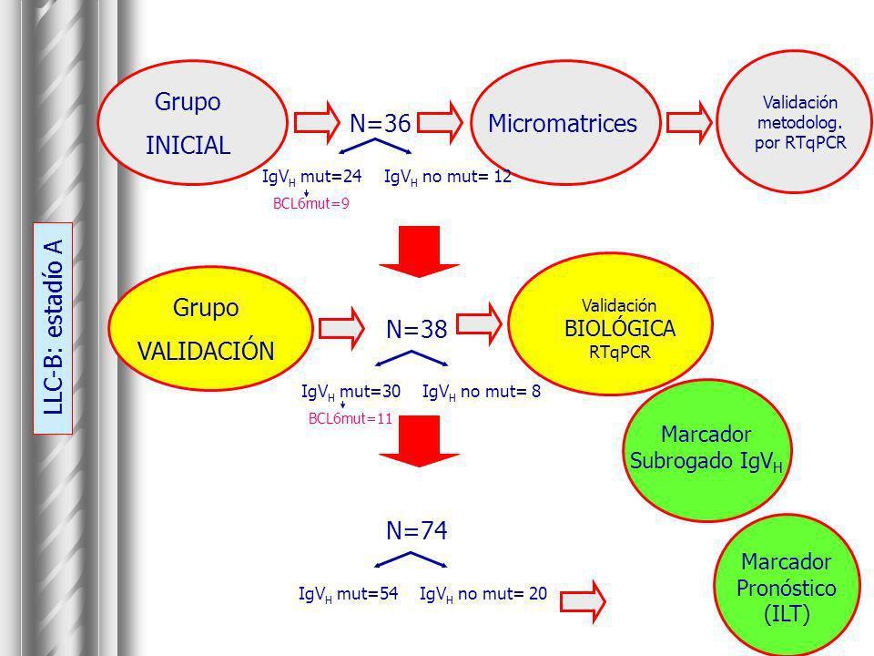 Grupo INICIAL Micromatrices Validación metodolog. por RTqPCR IgV H mut=24 BCL6mut=9 IgV H no mut= 12 N=36 Grupo VALIDACIÓN Validación BIOLÓGICA RTqPCR