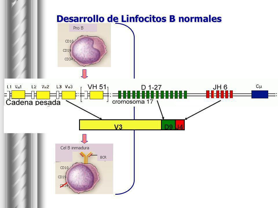Representación esquemática del gen BCL-6.