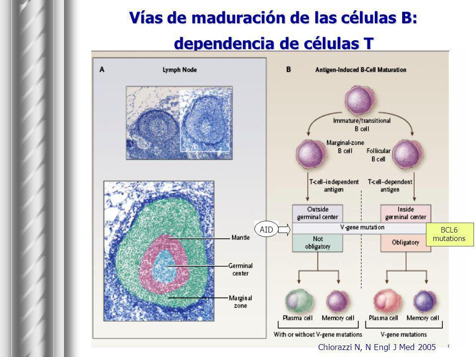 Vías de maduración de las células B: dependencia de células T Chiorazzi N, N Engl J Med 2005 BCL6 mutations AID