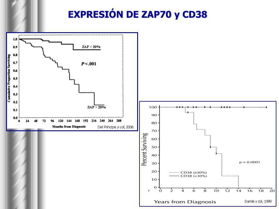 Inducción de apoptosis por Btz en células con IgV H mutado: correlación con mutaciones en BCL-6.