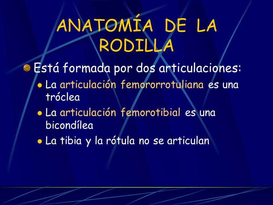 ANATOMÍA DE LA RODILLA Está formada por dos articulaciones: La articulación femororrotuliana es una tróclea La articulación femorotibial es una bicondílea La tibia y la rótula no se articulan