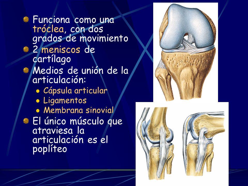 Funciona como una tróclea, con dos grados de movimiento 2 meniscos de cartílago Medios de unión de la articulación: Cápsula articular Ligamentos Membrana sinovial El único músculo que atraviesa la articulación es el poplíteo