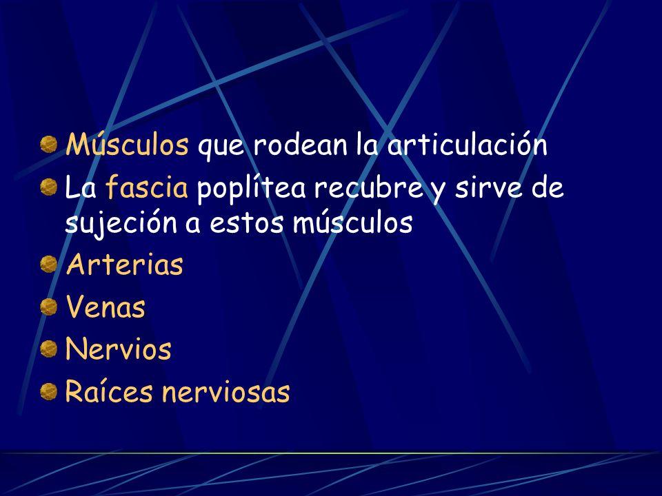 Funciona como una tróclea, con dos grados de movimiento 2 meniscos de cartílago Medios de unión de la articulación: Cápsula articular Ligamentos Membr
