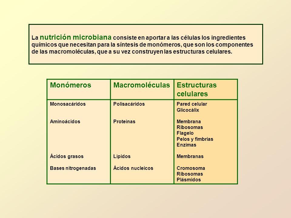 MonómerosMacromoléculasEstructuras celulares Monosacáridos Aminoácidos Ácidos grasos Bases nitrogenadas Polisacáridos Proteínas Lípidos Ácidos nucleic