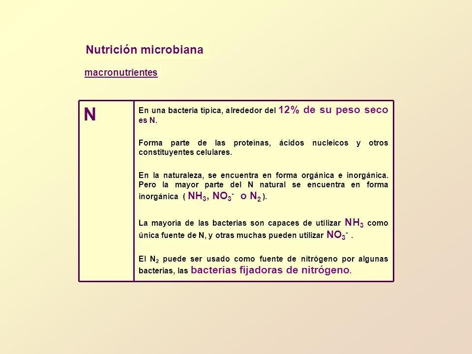 Nutrición microbiana En una bacteria típica, alrededor del 12% de su peso seco es N. Forma parte de las proteínas, ácidos nucleicos y otros constituye