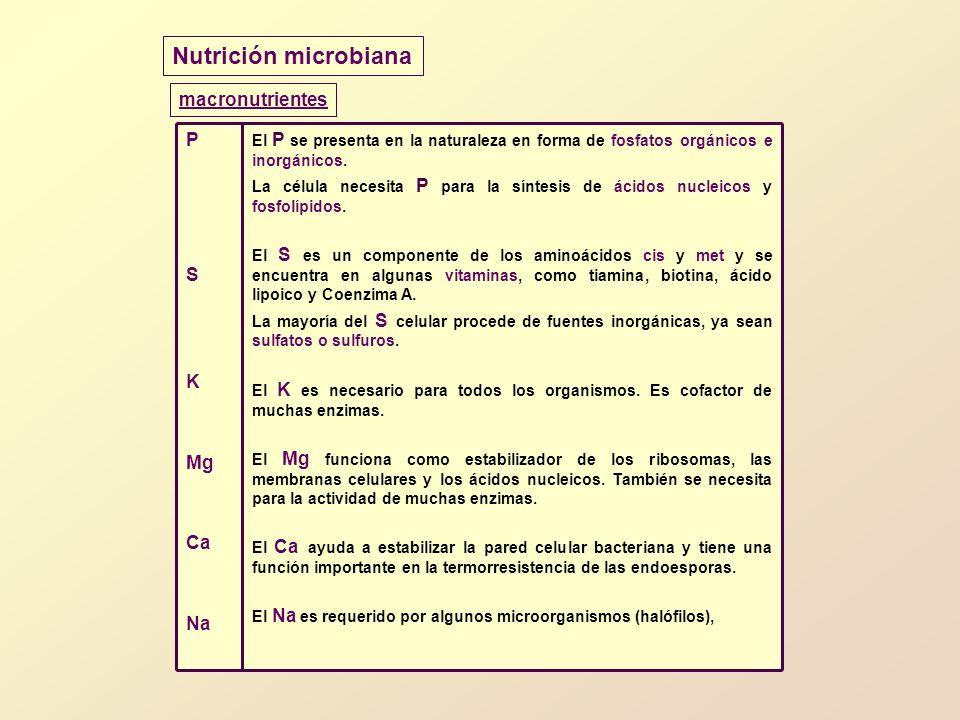 Nutrición microbiana macronutrientes El P se presenta en la naturaleza en forma de fosfatos orgánicos e inorgánicos. La célula necesita P para la sínt