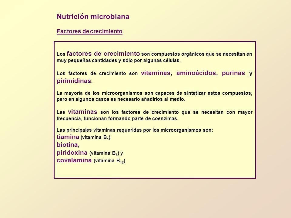 LECCIÓN 5.CULTIVO Y CRECIMIENTO DE MICROORGANISMOS 2.