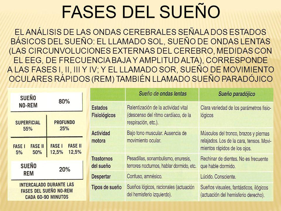 EL ANÁLISIS DE LAS ONDAS CEREBRALES SEÑALA DOS ESTADOS BÁSICOS DEL SUEÑO: EL LLAMADO SOL, SUEÑO DE ONDAS LENTAS (LAS CIRCUNVOLUCIONES EXTERNAS DEL CER