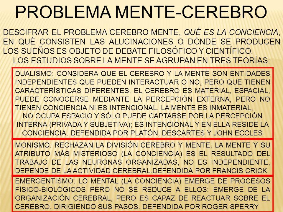 LA HIPNOSIS PODEMOS DISTINGUIR CUATRO FASES DEL TRANCE HIPNÓTICO: TRANCE PREHIPNÓTICO: SE PRODUCE UN ESTADO DE RELAJACIÓN, DURANTE EL CUAL EL INDIVIDUO NO SIENTE QUE HA SIDO HIPNOTIZADO, Y SE HACE MÁS FÁCIL LA CONVERSACIÓN TRANCE LIGERO: EN ESTA FASE, EL INDIVIDUO SE DA CUENTA DE LO QUE OCURRE A SU ALREDEDOR; MEDIANTE LAS SUGESTIONES REALIZADAS POR EL HIPNOTIZADOR VA PERCIBIENDO LA INVOLUNTARIEDAD Y LA DISOCIACIÓN (CAÍDA DE PÁRPADOS, LEVITACIÓN DEL BRAZO, ETC.) TRANCE MEDIO: EN ESTE ESTADO, LA CONCIENCIA NO ESTÁ PRESENTE Y EL HIPNOTIZADOR PUEDE INTRODUCIR SUGESTIONES COGNITIVAS Y ALUCINACIONES LIGERAS (POR EJEMPLO, IMAGINACIÓN DE HISTORIAS, ALUCINACIÓN DE CALOR Y SED) Y SE PUEDEN LOGRAR CIERTOS ÉXITOS.