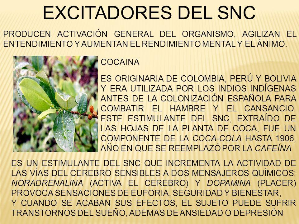 EXCITADORES DEL SNC ES ORIGINARIA DE COLOMBIA, PERÚ Y BOLIVIA Y ERA UTILIZADA POR LOS INDIOS INDÍGENAS ANTES DE LA COLONIZACIÓN ESPAÑOLA PARA COMBATIR