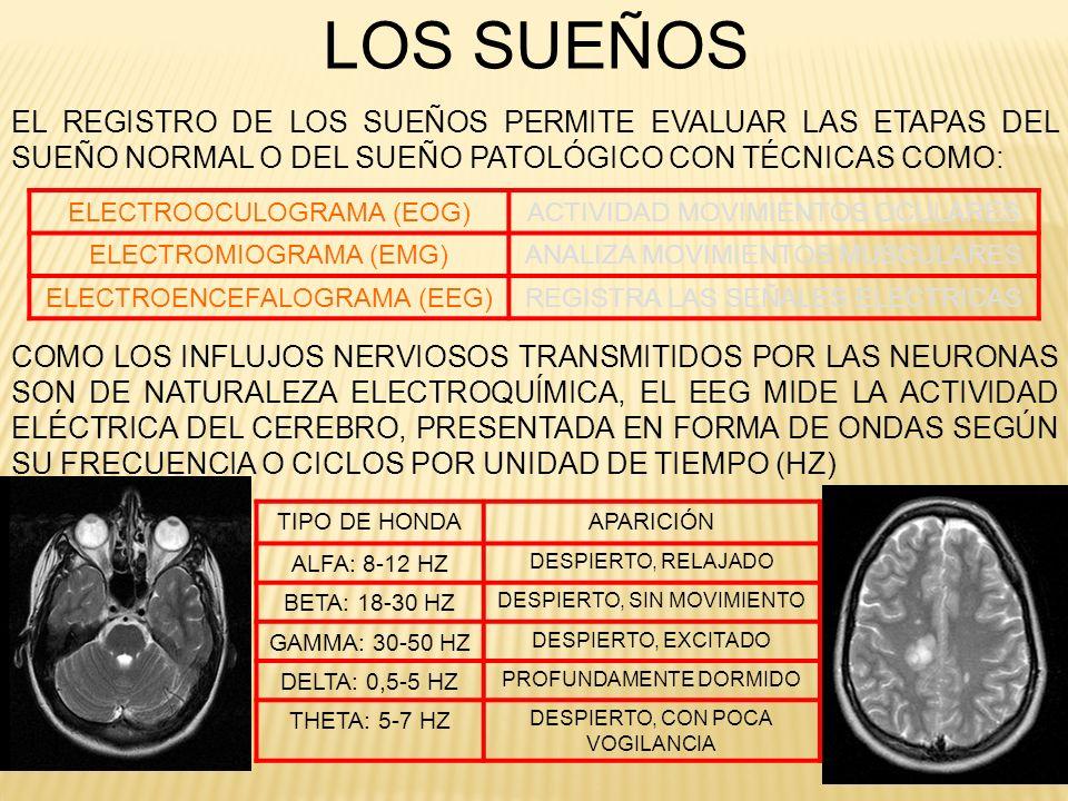 FASES DEL SUEÑO DE ACUERDO CON LOS DATOS APORTADOS POR EL EEG SABEMOS QUE LOS SUEÑOS NO CONSTITUYEN UN PROCESO HOMOGÉNEO Y CONTINUO, SINO QUE ATRAVIESAN VARIAS FASES ALTERNAS: FASE DE VIGILIA EN UNA PERSONA DESPIERTA CON GRAN ACTIVIDAD CORTICAL, PREDOMINAN ONDAS BETA DE 15 A 30 HZ Y CUANDO SE RELAJA O CUANDO CIERRA LOS OJOS APARECE UN RITMO ALFA CON ONDAS DE 9 A 12 HZ FASE I (TRANSICION DE LA VIGILIA AL SUEÑO) ONDAS CEREBRALES DE 3 A 7 HZ QUE REPRESENTA EL 5% DEL TIEMPO DE SUEÑO, SE PRODUCE DISMINUCIÓN DEL LATIDO CARDÍACO, LOS MÚSCULOS DEL CUERPO SE RELAJAN, LA RESPIRACIÓN SE VUELVE IRREGULAR.