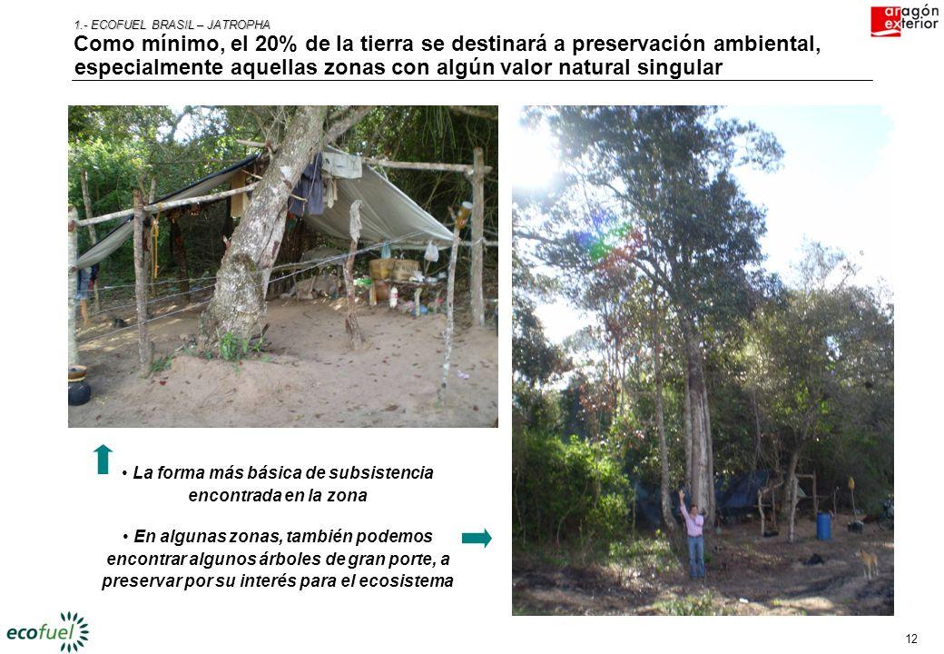 11 1.- ECOFUEL BRASIL – JATROPHA Las zonas del proyecto no presentan interés para el sector alimentario En la mayoría de las zonas, la vegetación no l