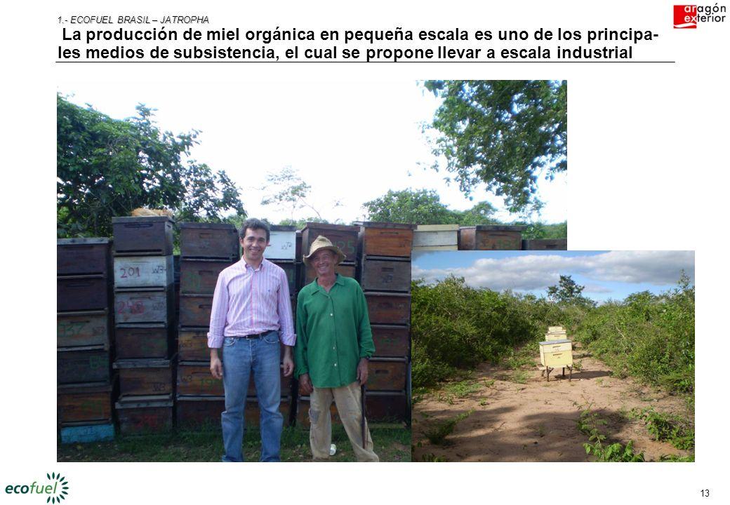 12 1.- ECOFUEL BRASIL – JATROPHA Como mínimo, el 20% de la tierra se destinará a preservación ambiental, especialmente aquellas zonas con algún valor